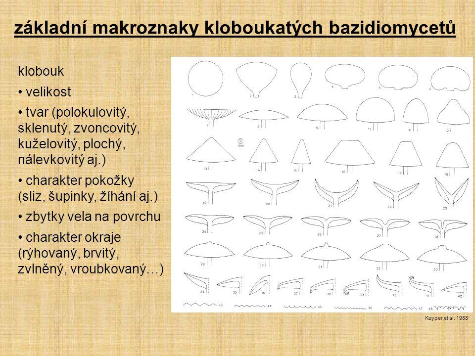 klobouk velikost tvar (polokulovitý, sklenutý, zvoncovitý, kuželovitý, plochý, nálevkovitý aj.) charakter pokožky (sliz, šupinky, žíhání aj.) zbytky v
