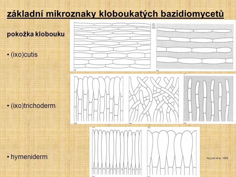 pokožka klobouku (ixo)cutis (ixo)trichoderm hymeniderm Kuyper et al. 1988