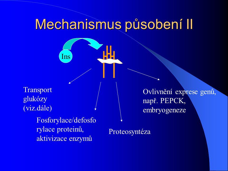 Mechanismus působení I Vazba na glykoproteinový receptor, α a β podjednotky, S-S Receptor s tyrosinkinazovou aktivitou,agregují a internalizují Intracelulární posel zatím neznámý  Pokud je koncentrace insulinu příliš vysoká – down regulation = klesá počet receptorů