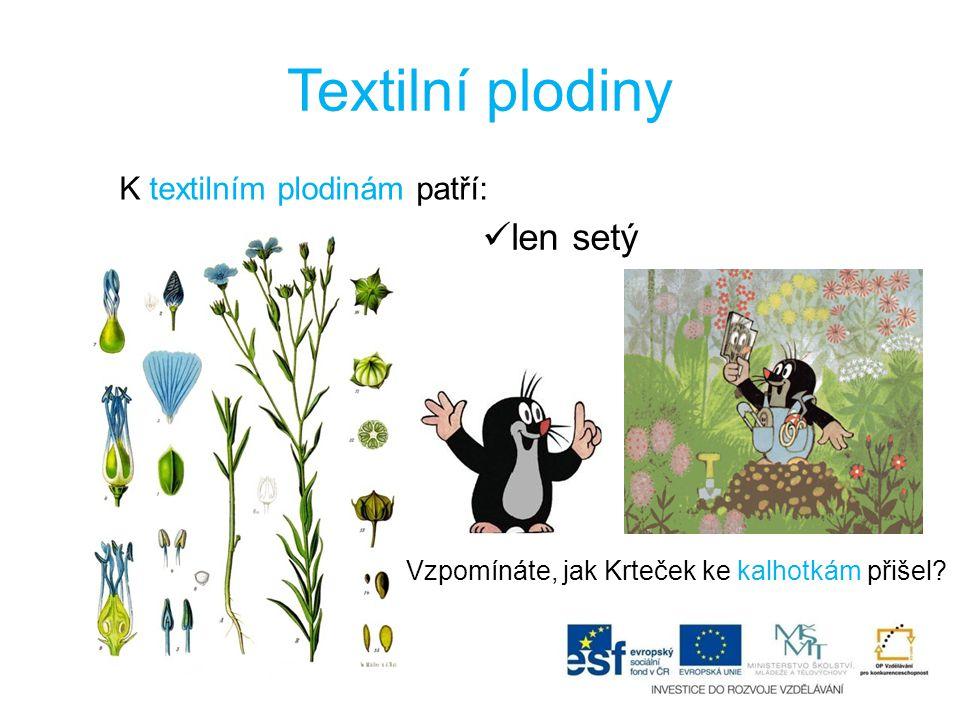 Textilní plodiny K textilním plodinám patří: len setý Vzpomínáte, jak Krteček ke kalhotkám přišel?
