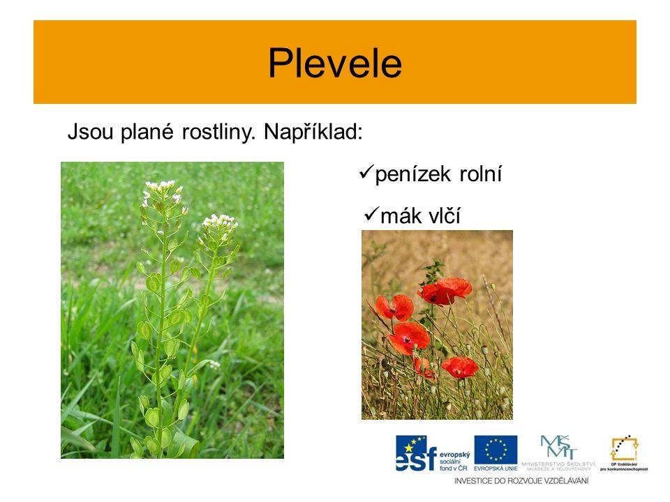 Plevele Jsou plané rostliny. Například: penízek rolní mák vlčí