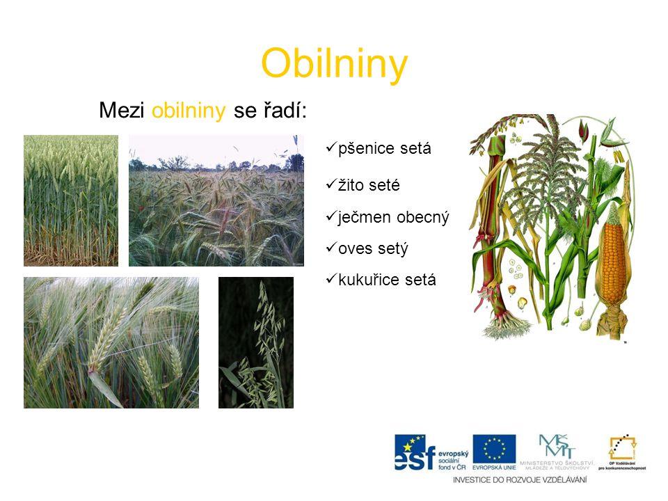 Obilniny Mezi obilniny se řadí: pšenice setá žito seté ječmen obecný oves setý kukuřice setá
