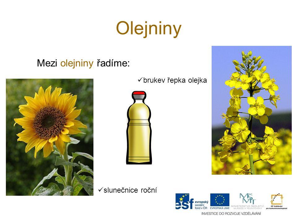 Olejniny Mezi olejniny řadíme: brukev řepka olejka slunečnice roční