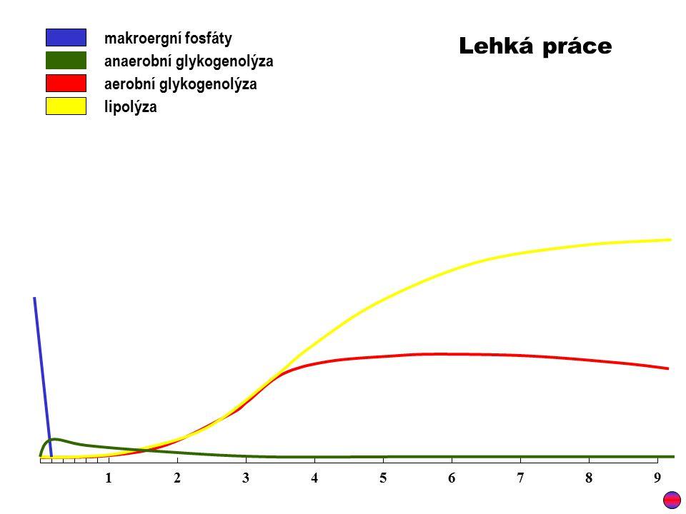 makroergní fosfáty anaerobní glykogenolýza aerobní glykogenolýza 123456789 Lehká práce lipolýza