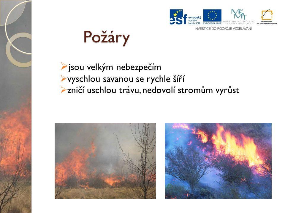 Požáry  jsou velkým nebezpečím  vyschlou savanou se rychle šíří  zničí uschlou trávu, nedovolí stromům vyrůst