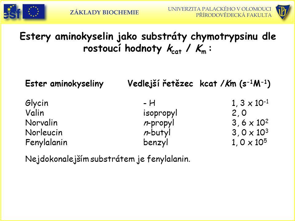 Estery aminokyselin jako substráty chymotrypsinu dle rostoucí hodnoty k cat / K m : Ester aminokyseliny Vedlejší řetězec kcat /Km (s -1 M -1 ) Glycin-