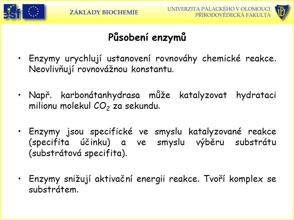 Působení enzymů Enzymy urychlují ustanovení rovnováhy chemické reakce. Neovlivňují rovnovážnou konstantu. Např. karbonátanhydrasa může katalyzovat hyd