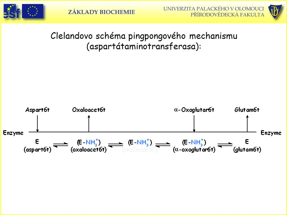 Clelandovo schéma pingpongového mechanismu (aspartátaminotransferasa):
