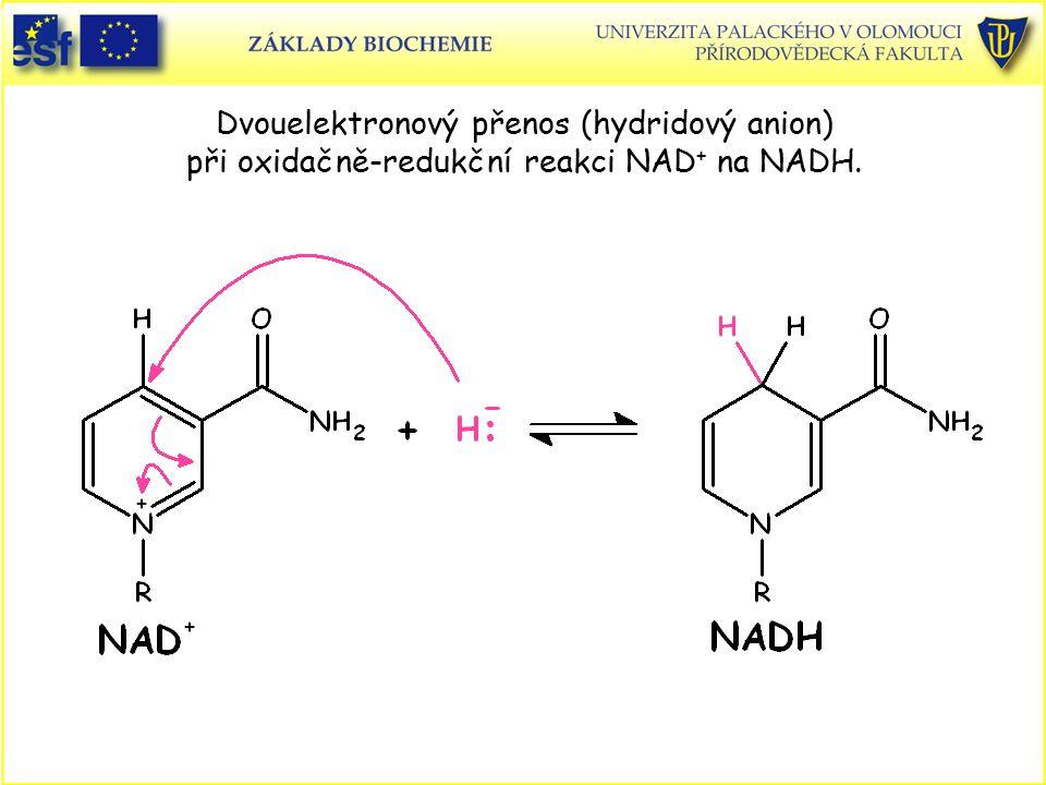 Dvouelektronový přenos (hydridový anion) při oxidačně-redukční reakci NAD + na NADH.