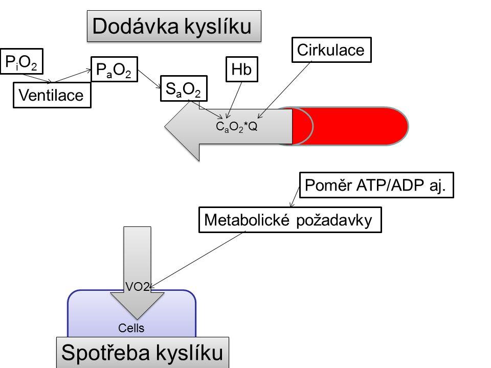 Cells Dodávka kyslíku C a O 2 *Q PaO2PaO2 SaO2SaO2 Hb Cirkulace Ventilace PiO2PiO2 VO2 Spotřeba kyslíku Metabolické požadavky Poměr ATP/ADP aj.