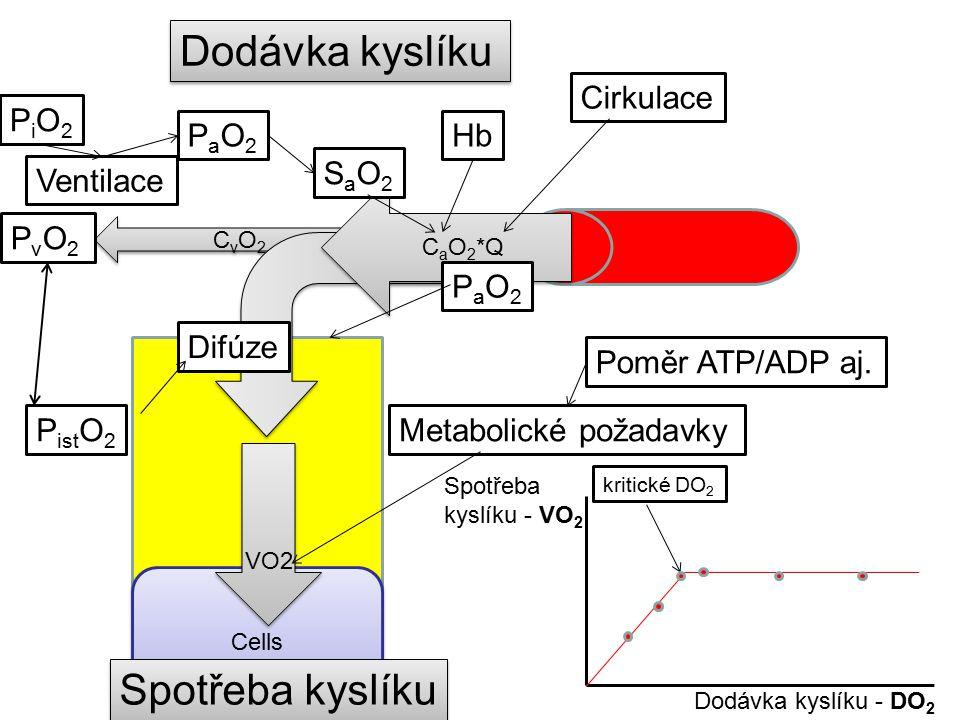 CvO2CvO2 CvO2CvO2 PvO2PvO2 Cells Dodávka kyslíku C a O 2 *Q PaO2PaO2 SaO2SaO2 Hb Cirkulace Ventilace PiO2PiO2 VO2 Spotřeba kyslíku PaO2PaO2 P ist O 2