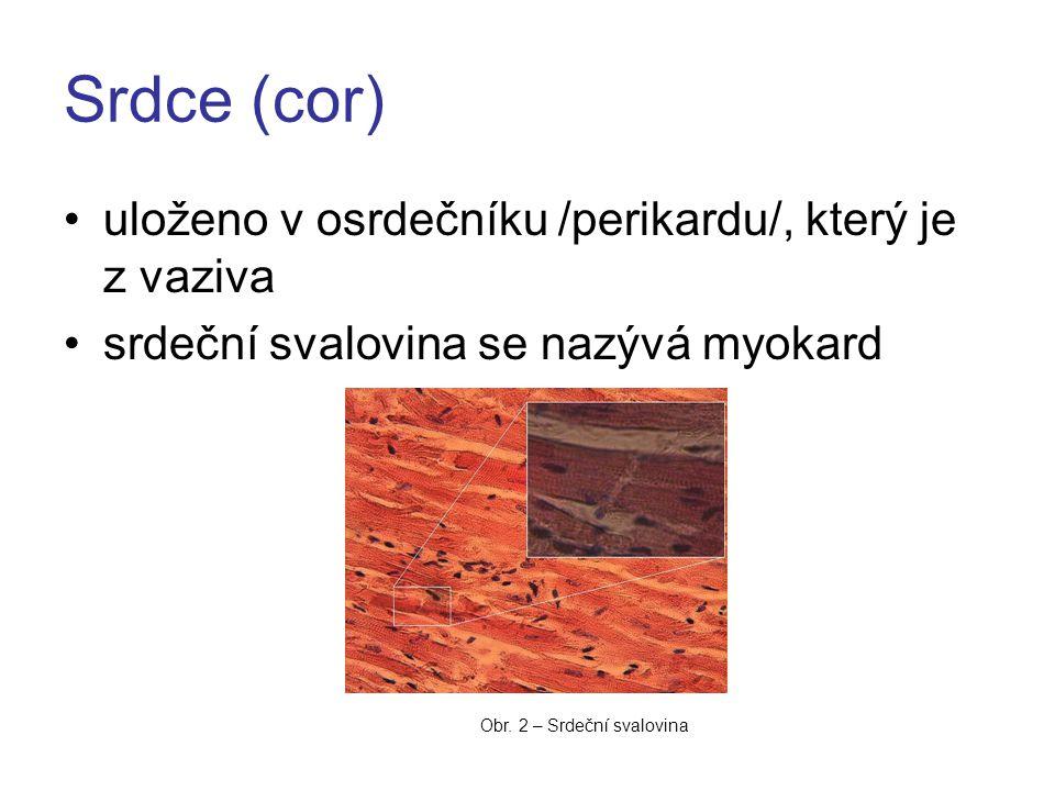 Srdce (cor) uloženo v osrdečníku /perikardu/, který je z vaziva srdeční svalovina se nazývá myokard Obr.