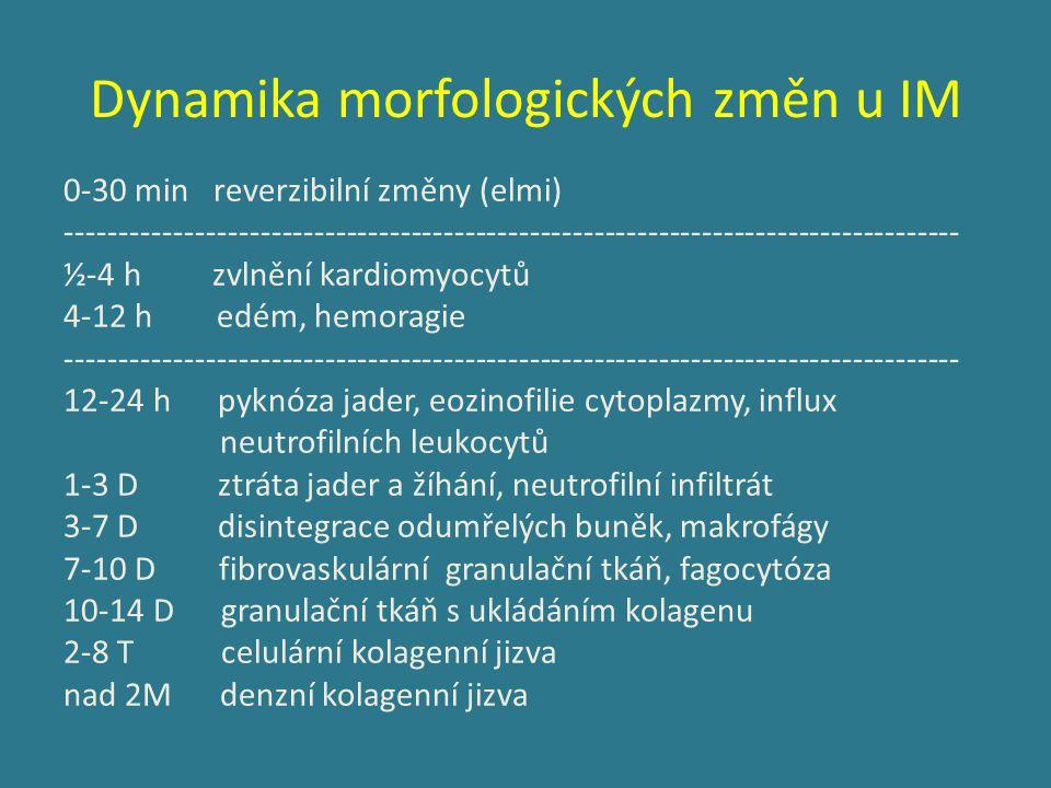 Dynamika morfologických změn u IM 0-30 min reverzibilní změny (elmi) ----------------------------------------------------------------------------------- ½-4 h zvlnění kardiomyocytů 4-12 h edém, hemoragie ----------------------------------------------------------------------------------- 12-24 h pyknóza jader, eozinofilie cytoplazmy, influx neutrofilních leukocytů 1-3 D ztráta jader a žíhání, neutrofilní infiltrát 3-7 D disintegrace odumřelých buněk, makrofágy 7-10 D fibrovaskulární granulační tkáň, fagocytóza 10-14 D granulační tkáň s ukládáním kolagenu 2-8 T celulární kolagenní jizva nad 2M denzní kolagenní jizva