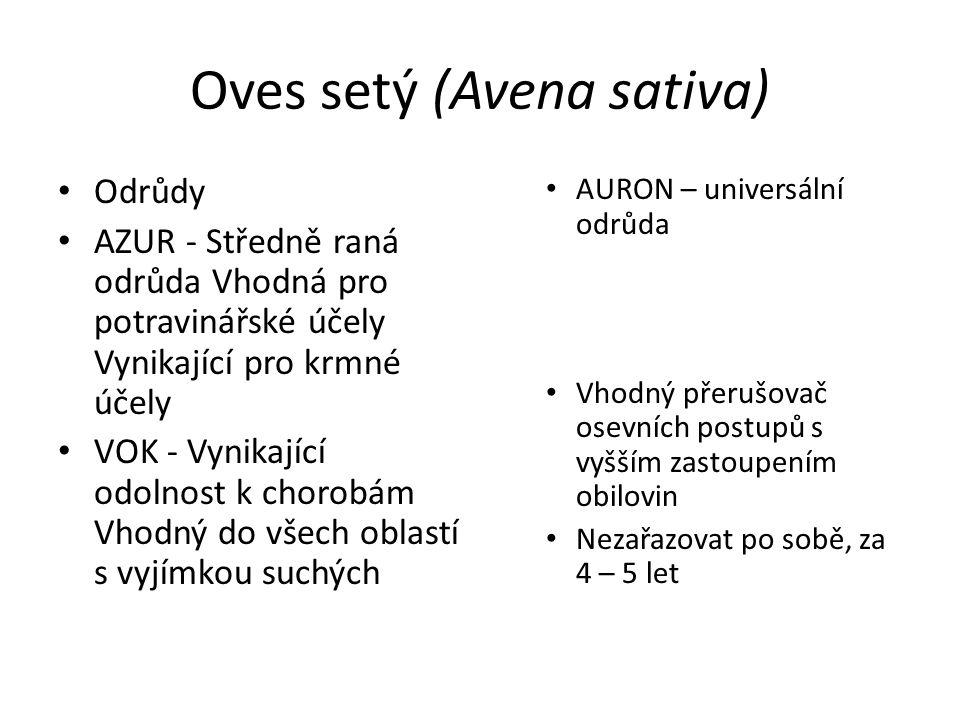 Oves setý (Avena sativa) AURON – universální odrůda Vhodný přerušovač osevních postupů s vyšším zastoupením obilovin Nezařazovat po sobě, za 4 – 5 let
