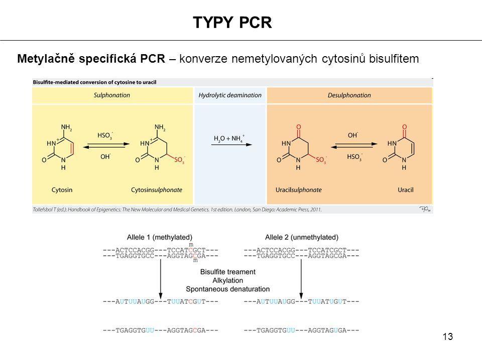 13 TYPY PCR Metylačně specifická PCR – konverze nemetylovaných cytosinů bisulfitem