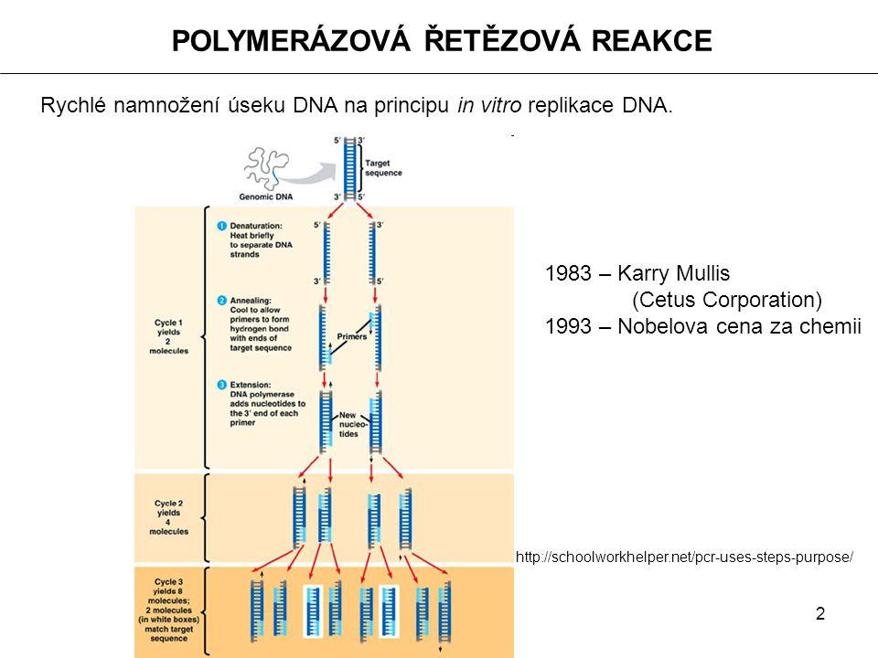2 POLYMERÁZOVÁ ŘETĚZOVÁ REAKCE Rychlé namnožení úseku DNA na principu in vitro replikace DNA. http://schoolworkhelper.net/pcr-uses-steps-purpose/ 1983