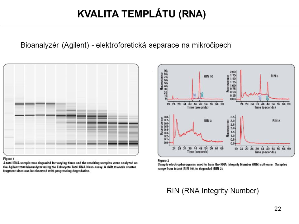 22 KVALITA TEMPLÁTU (RNA) Bioanalyzér (Agilent) - elektroforetická separace na mikročipech RIN (RNA Integrity Number)