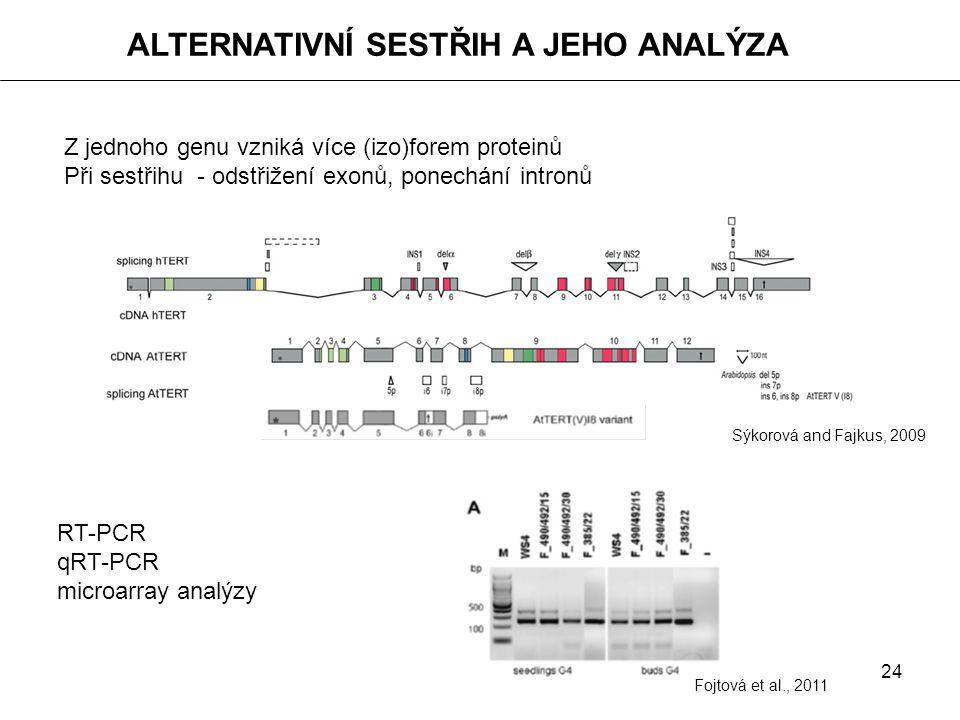 24 ALTERNATIVNÍ SESTŘIH A JEHO ANALÝZA Z jednoho genu vzniká více (izo)forem proteinů Při sestřihu - odstřižení exonů, ponechání intronů Sýkorová and