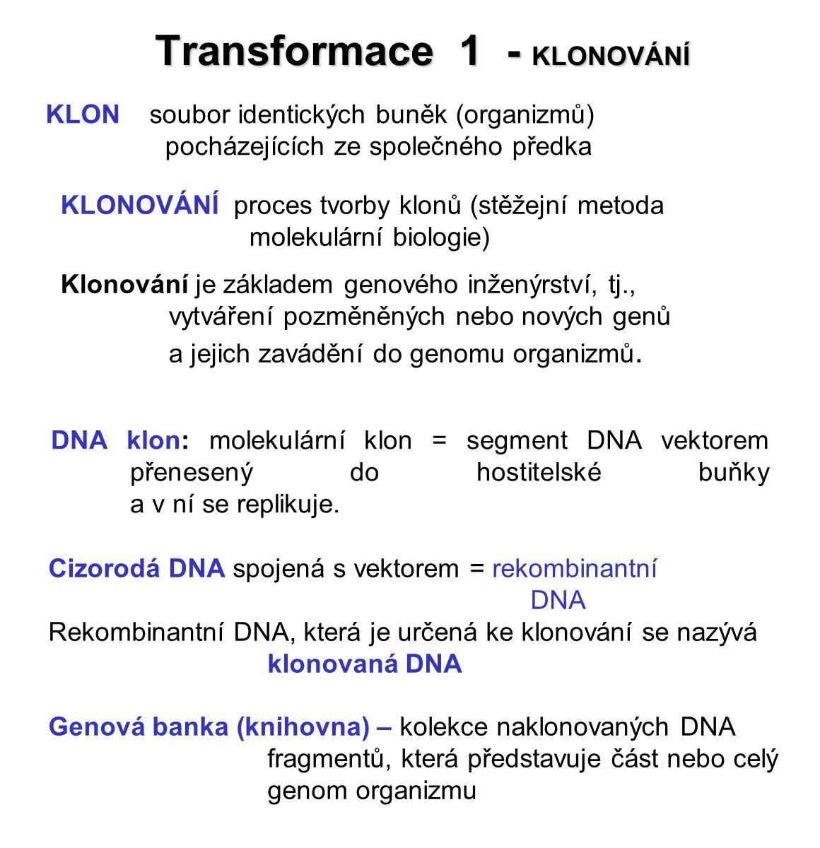 Transformace 1 - KLONOVÁNÍ KLON soubor identických buněk (organizmů) pocházejících ze společného předka KLONOVÁNÍ proces tvorby klonů (stěžejní metoda molekulární biologie) Klonování je základem genového inženýrství, tj., vytváření pozměněných nebo nových genů a jejich zavádění do genomu organizmů.