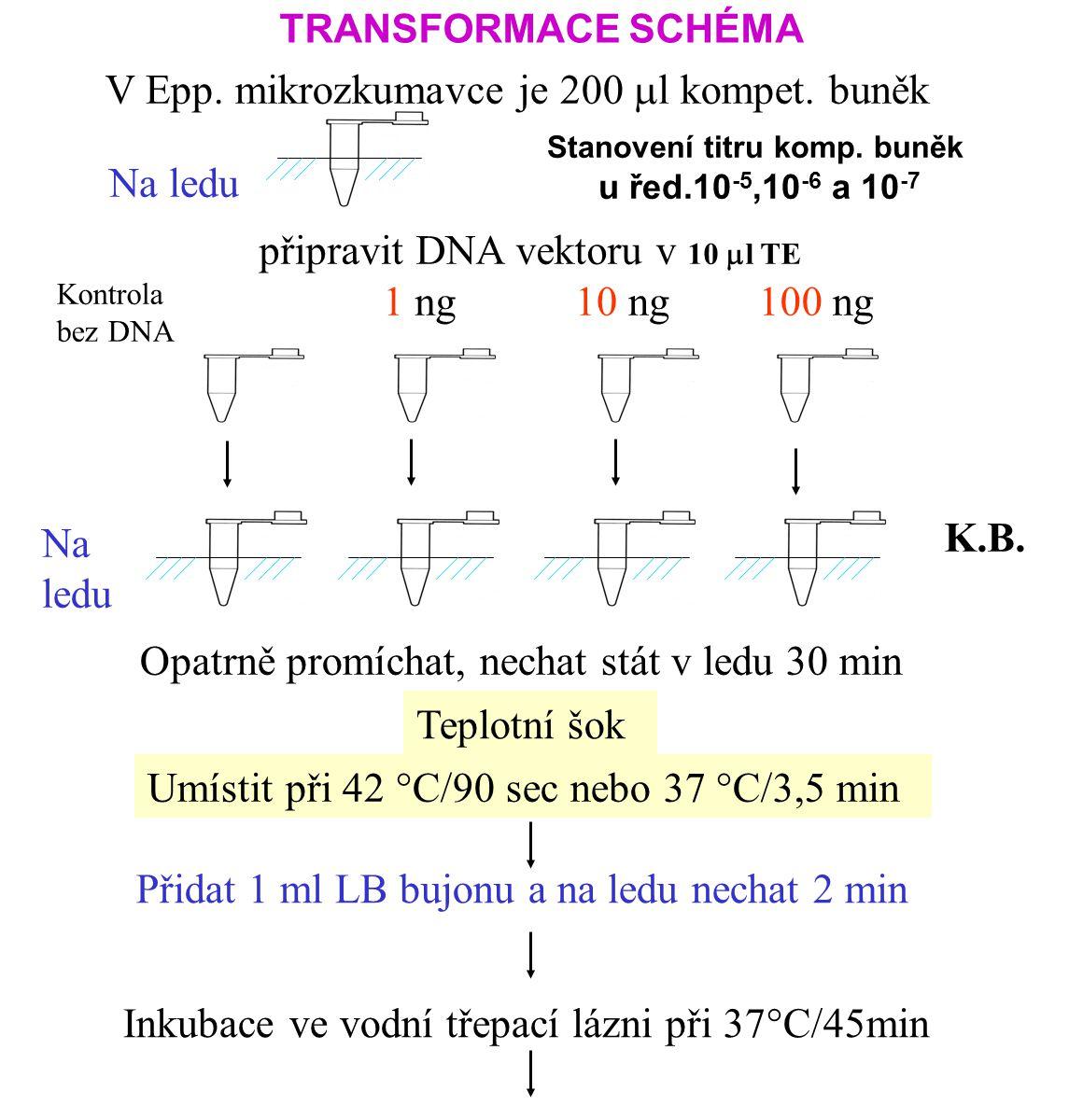TRANSFORMACE SCHÉMA V Epp.mikrozkumavce je 200 m l kompet.