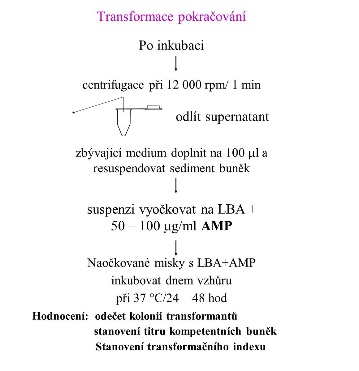 Transformace pokračování odlít supernatant zbývající medium doplnit na 100 m l a resuspendovat sediment buněk suspenzi vyočkovat na LBA + 50 – 100 m g/ml AMP Naočkované misky s LBA+AMP inkubovat dnem vzhůru při 37 °C/24 – 48 hod Hodnocení: odečet kolonií transformantů stanovení titru kompetentních buněk Stanovení transformačního indexu centrifugace při 12 000 rpm/ 1 min Po inkubaci
