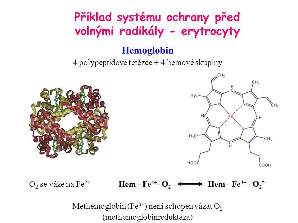 Hemoglobin 4 polypeptidové řetězce + 4 hemové skupiny O 2 se váže na Fe 2+ Hem - Fe 2+ - O 2 Hem - Fe 3+ - O 2 - Methemoglobin (Fe 3+ ) není schopen v