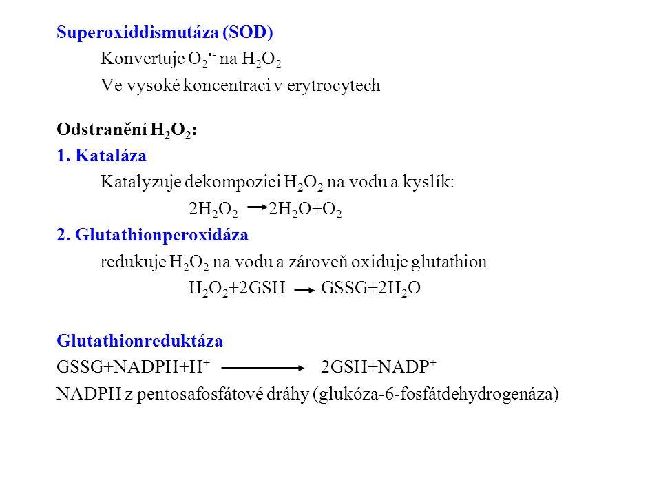 Superoxiddismutáza (SOD) Konvertuje O 2 - na H 2 O 2 Ve vysoké koncentraci v erytrocytech Odstranění H 2 O 2 : 1. Kataláza Katalyzuje dekompozici H 2