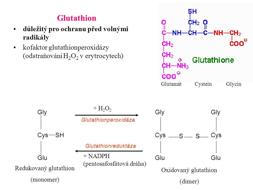 Glutathion důležitý pro ochranu před volnými radikály kofaktor glutathionperoxidázy (odstraňování H 2 O 2 v erytrocytech) Gly Cys Glu Gly Cys Glu Gly