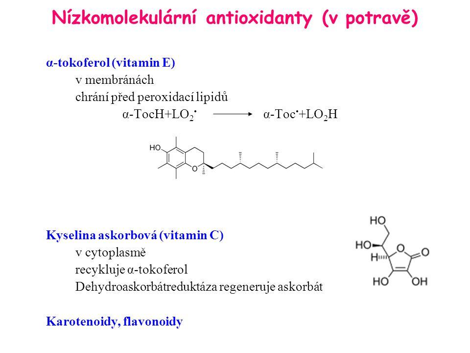 Nízkomolekulární antioxidanty (v potravě) α-tokoferol (vitamin E) v membránách chrání před peroxidací lipidů α-TocH+LO 2 α-Toc +LO 2 H Kyselina askorb