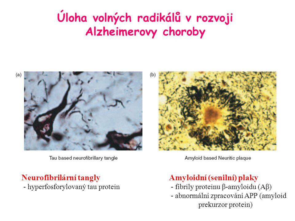 Neurofibrilární tanglyAmyloidní (senilní) plaky - hyperfosforylovaný tau protein - fibrily proteinu β-amyloidu (Aβ) - abnormální zpracování APP (amylo