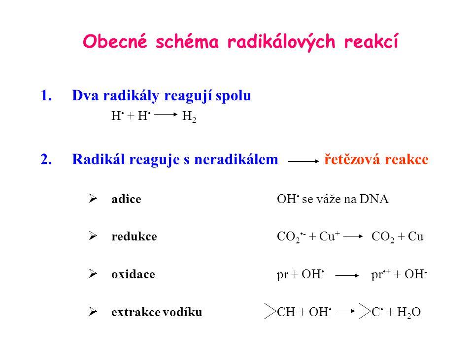 Obecné schéma radikálových reakcí 1.Dva radikály reagují spolu H + H H 2 2.Radikál reaguje s neradikálem řetězová reakce  adiceOH se váže na DNA  re
