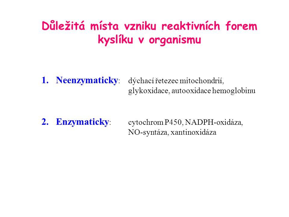Důležitá místa vzniku reaktivních forem kyslíku v organismu 1.Neenzymaticky :dýchací řetezec mitochondrií, glykoxidace, autooxidace hemoglobinu 2.Enzy
