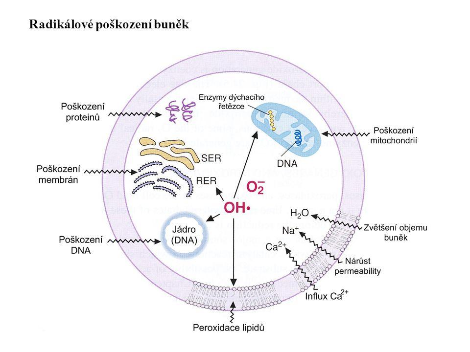 Radikálové poškození buněk