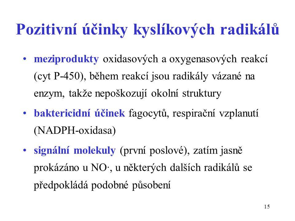 15 Pozitivní účinky kyslíkových radikálů meziprodukty oxidasových a oxygenasových reakcí (cyt P-450), během reakcí jsou radikály vázané na enzym, takž