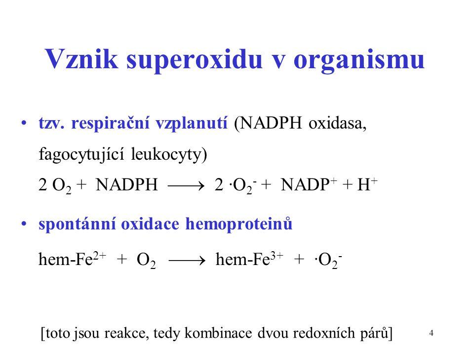 4 Vznik superoxidu v organismu tzv. respirační vzplanutí (NADPH oxidasa, fagocytující leukocyty) 2 O 2 + NADPH  2 ·O 2 - + NADP + + H + spontánní ox