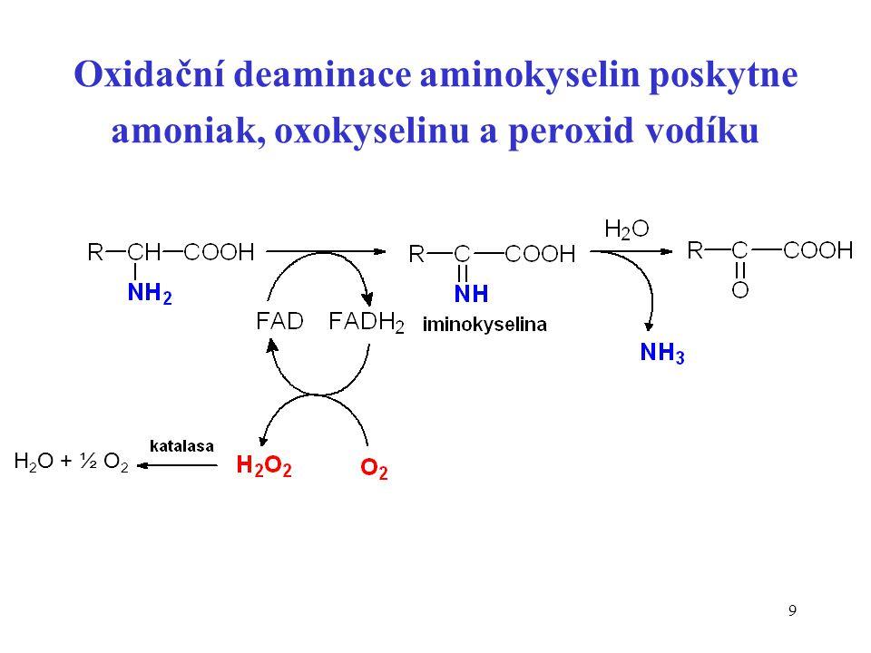 9 Oxidační deaminace aminokyselin poskytne amoniak, oxokyselinu a peroxid vodíku H 2 O + ½ O 2