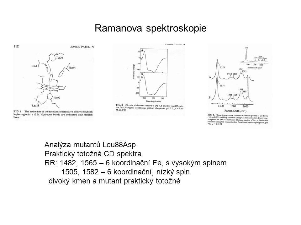 Ramanova spektroskopie Analýza mutantů Leu88Asp Prakticky totožná CD spektra RR: 1482, 1565 – 6 koordinační Fe, s vysokým spinem 1505, 1582 – 6 koordi