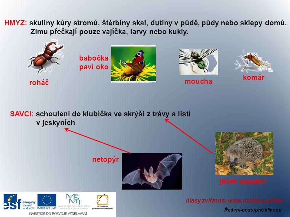 HMYZ: skuliny kůry stromů, štěrbiny skal, dutiny v půdě, půdy nebo sklepy domů. Zimu přečkají pouze vajíčka, larvy nebo kukly. komár moucha babočka pa