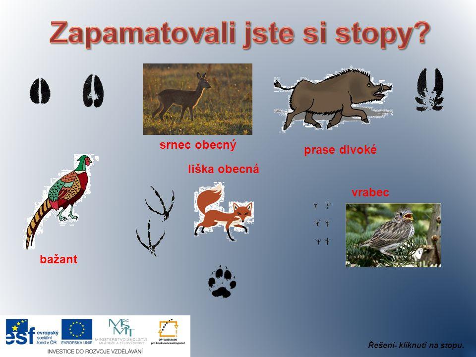 srnec obecný prase divoké bažant liška obecná vrabec Řešení- kliknutí na stopu.