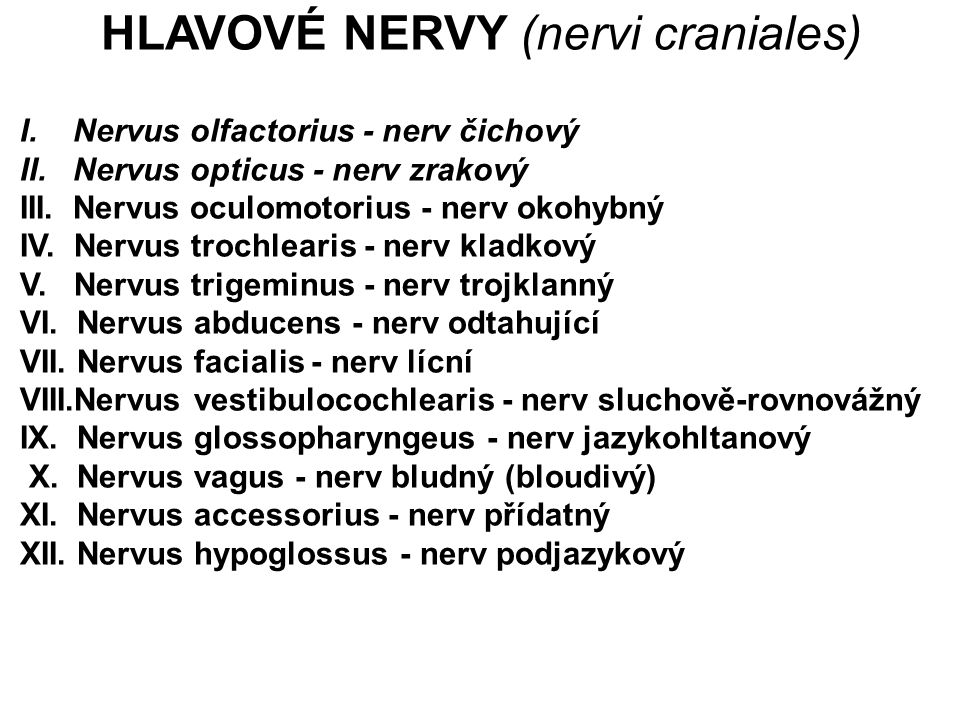 I. Nervus olfactorius - nerv čichový II. Nervus opticus - nerv zrakový III. Nervus oculomotorius - nerv okohybný IV. Nervus trochlearis - nerv kladkov