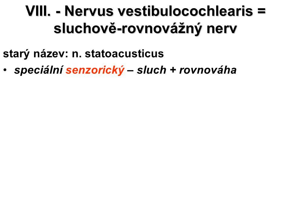 VIII. - Nervus vestibulocochlearis = sluchově-rovnovážný nerv starý název: n. statoacusticus speciální senzorický – sluch + rovnováha