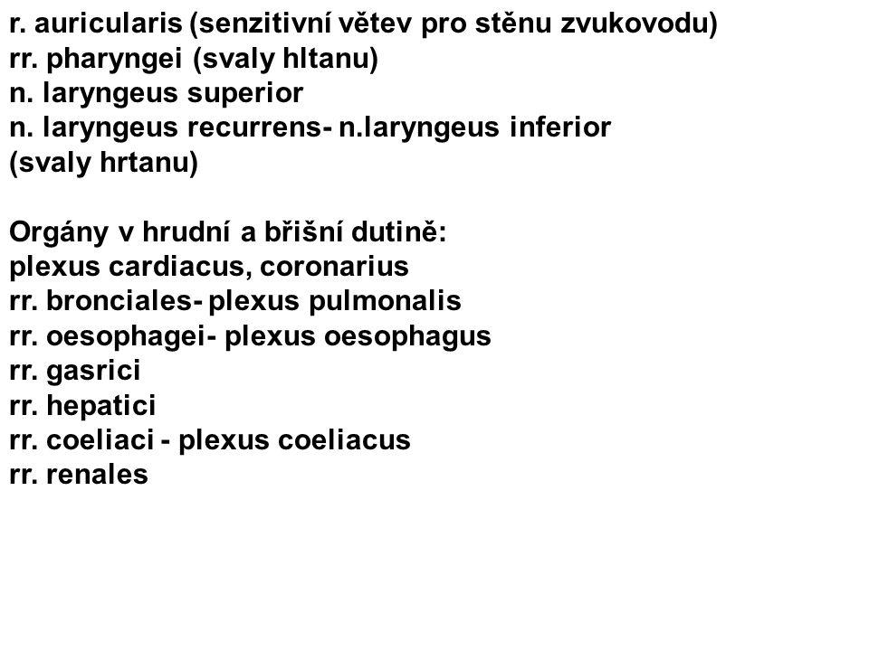 r. auricularis (senzitivní větev pro stěnu zvukovodu) rr. pharyngei (svaly hltanu) n. laryngeus superior n. laryngeus recurrens- n.laryngeus inferior