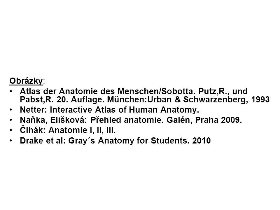 Obrázky: Atlas der Anatomie des Menschen/Sobotta. Putz,R., und Pabst,R. 20. Auflage. München:Urban & Schwarzenberg, 1993 Netter: Interactive Atlas of