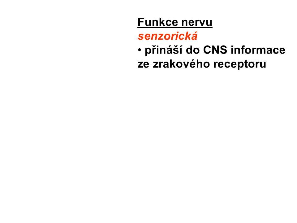 Funkce nervu senzorická přináší do CNS informace ze zrakového receptoru