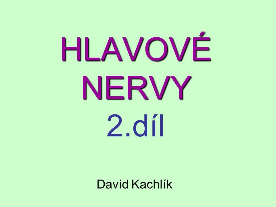 nervus laryngeus recurrens nervus laryngeus superior