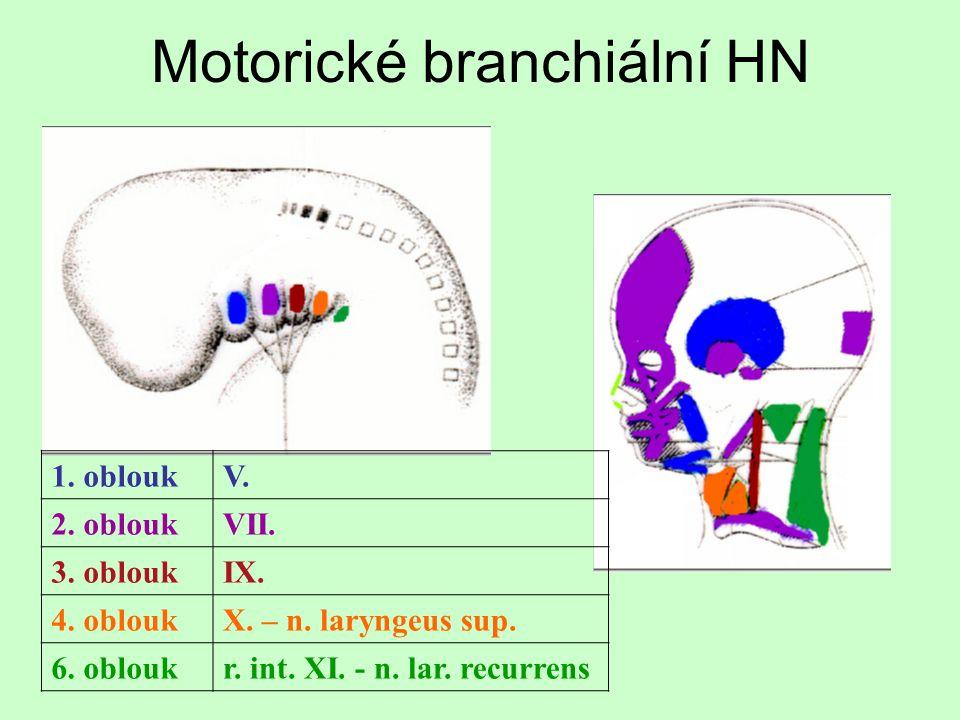 Postranní smíšený systém n.IX + n.X + n.XIn.IX + n.X + n.XI kořeny vystupují dorzálně od olivy z prodloužené míchy (= sulcus retroolivaris) společná jádra vedou všechny modality kromě sympatických vláken opouštějí lebku přes foramen jugulare