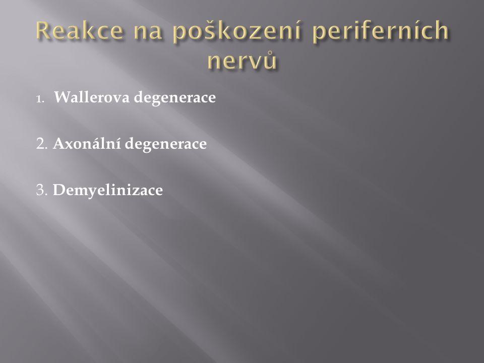 1. Wallerova degenerace 2. Axonální degenerace 3. Demyelinizace