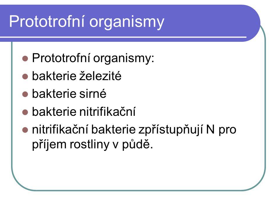 Prototrofní organismy Prototrofní organismy: bakterie železité bakterie sirné bakterie nitrifikační nitrifikační bakterie zpřístupňují N pro příjem rostliny v půdě.