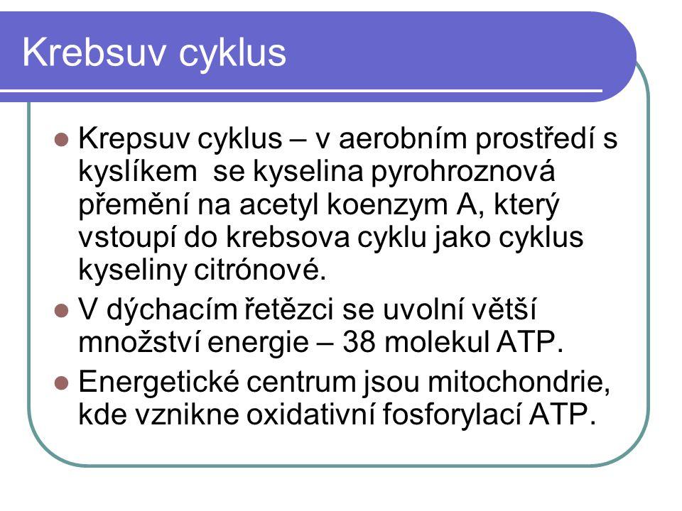Krebsuv cyklus Krepsuv cyklus – v aerobním prostředí s kyslíkem se kyselina pyrohroznová přemění na acetyl koenzym A, který vstoupí do krebsova cyklu jako cyklus kyseliny citrónové.
