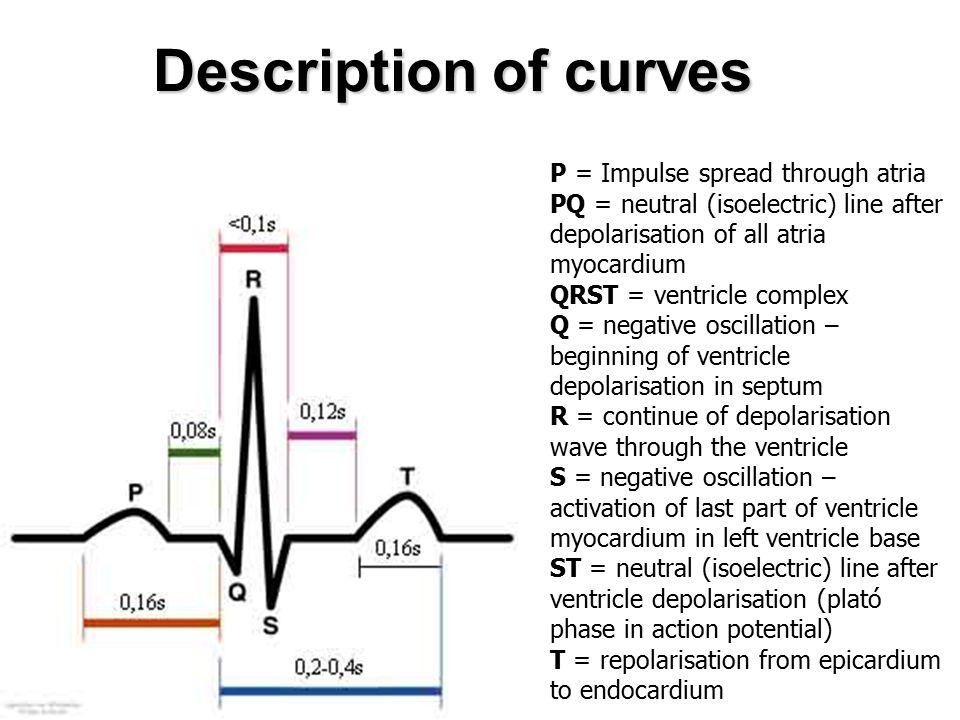 Description of curves P = Impulse spread through atria PQ = neutral (isoelectric) line after depolarisation of all atria myocardium QRST = ventricle c